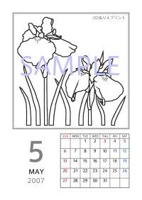 無料の塗り絵 花のぬりえカレンダー2007 平成19年 5月 ハナショウブ 花菖蒲 ぬりえイラスト