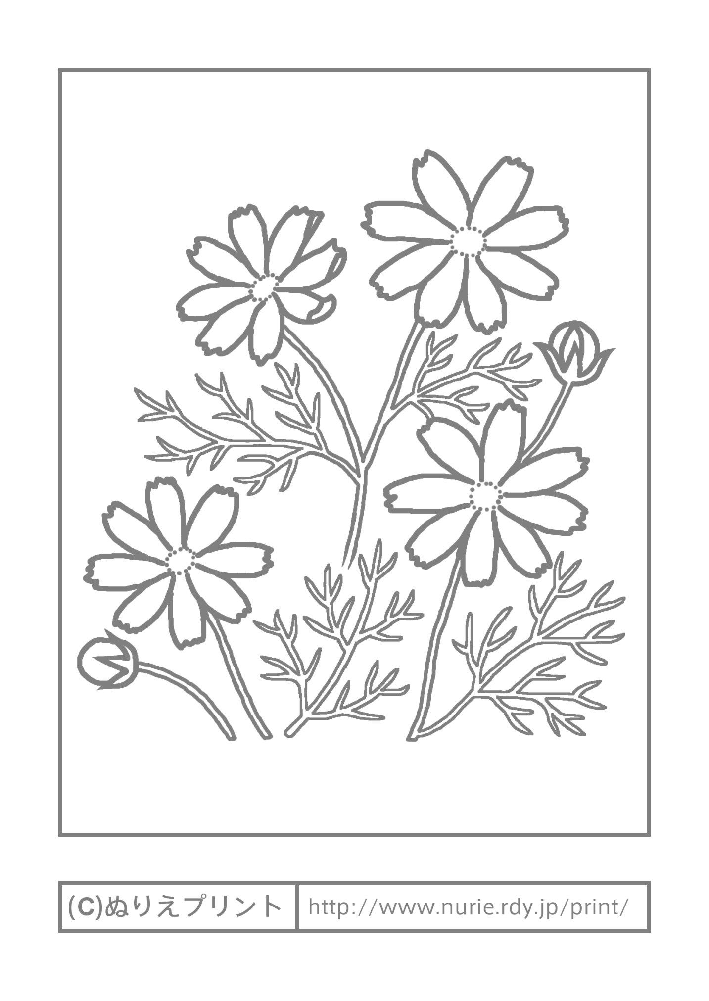 コスモス(主線・グレー)/秋の花/無料塗り絵イラスト【ぬりえプリント】