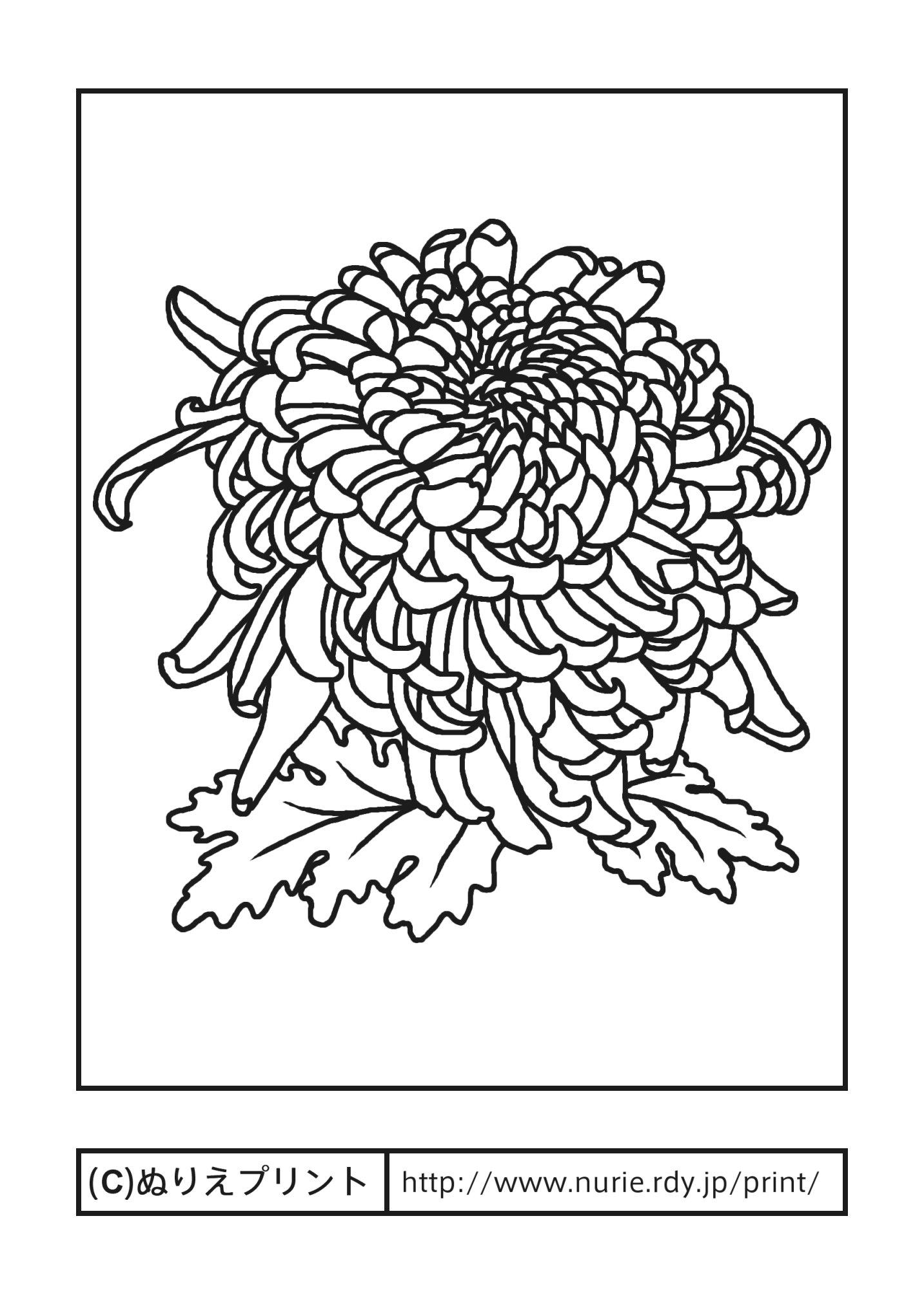 Hana Print : 塗り絵印刷 : 印刷