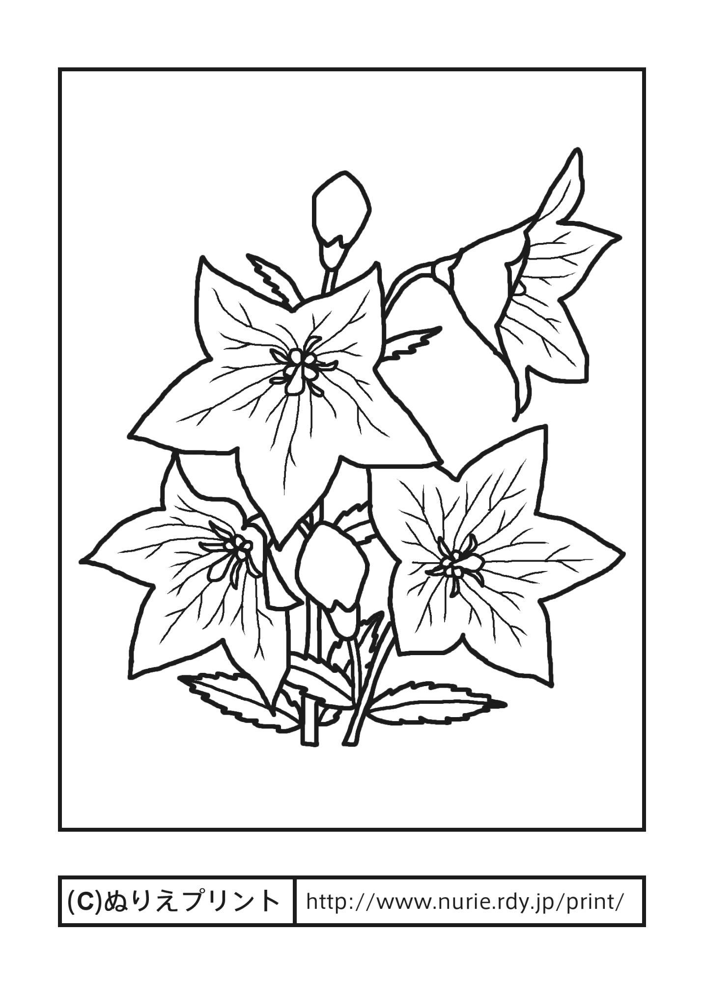 キキョウ(主線・黒)/秋の花/無料塗り絵イラスト【ぬりえプリント】