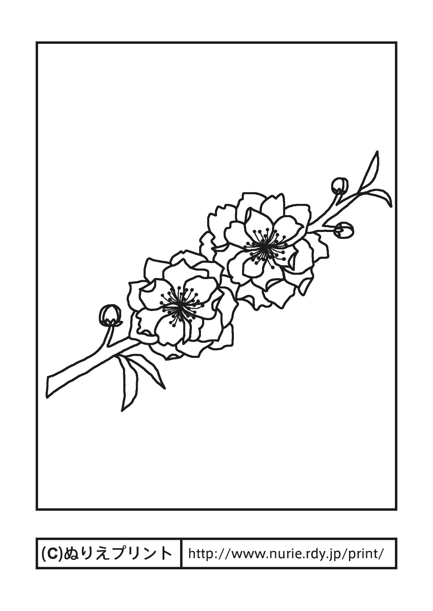 モモ(主線・黒)/春の花/無料塗り絵イラスト【ぬりえプリント】