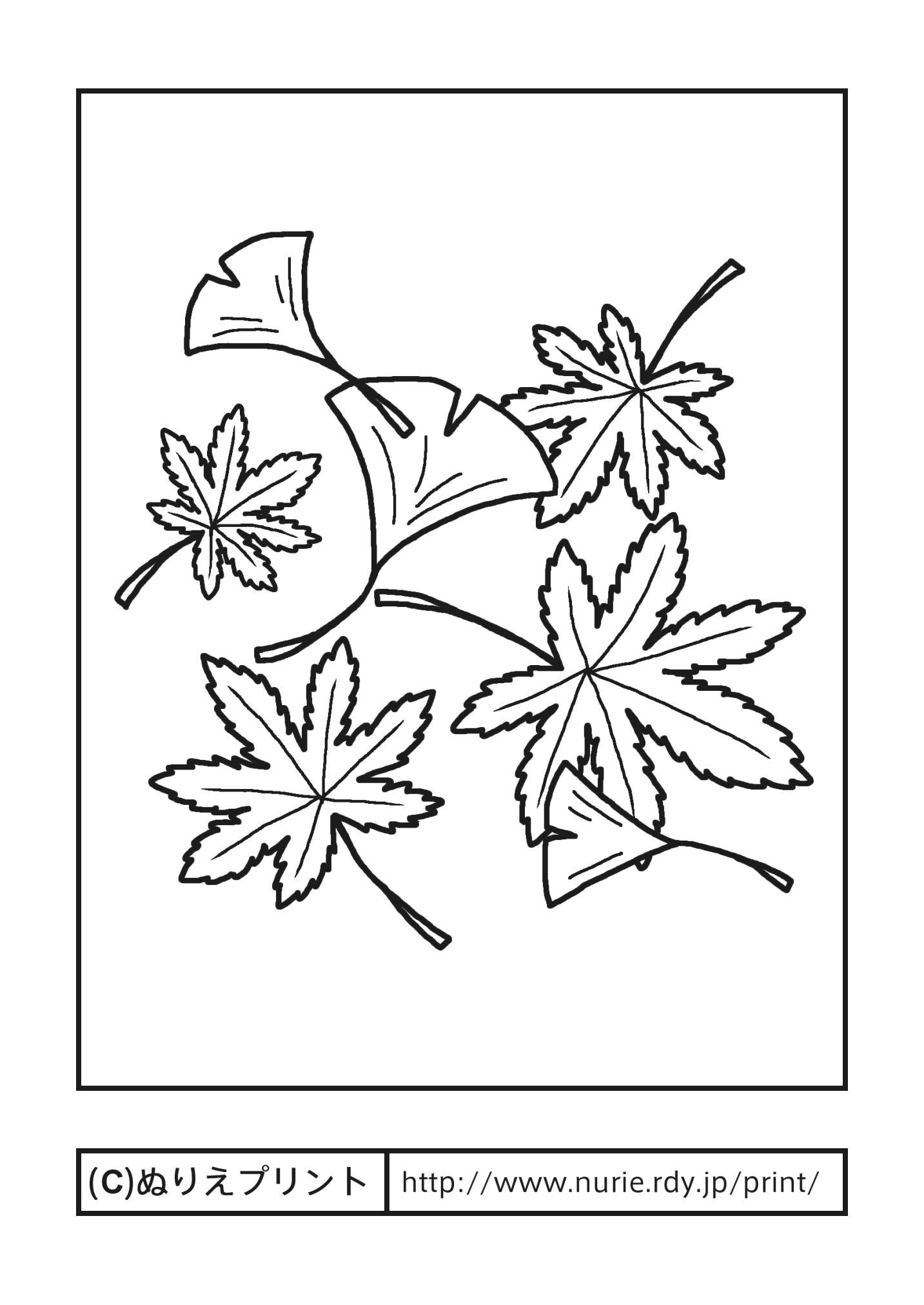 落ち葉・紅葉と銀杏(主線・黒)/秋の季節・行事/大人の塗り絵
