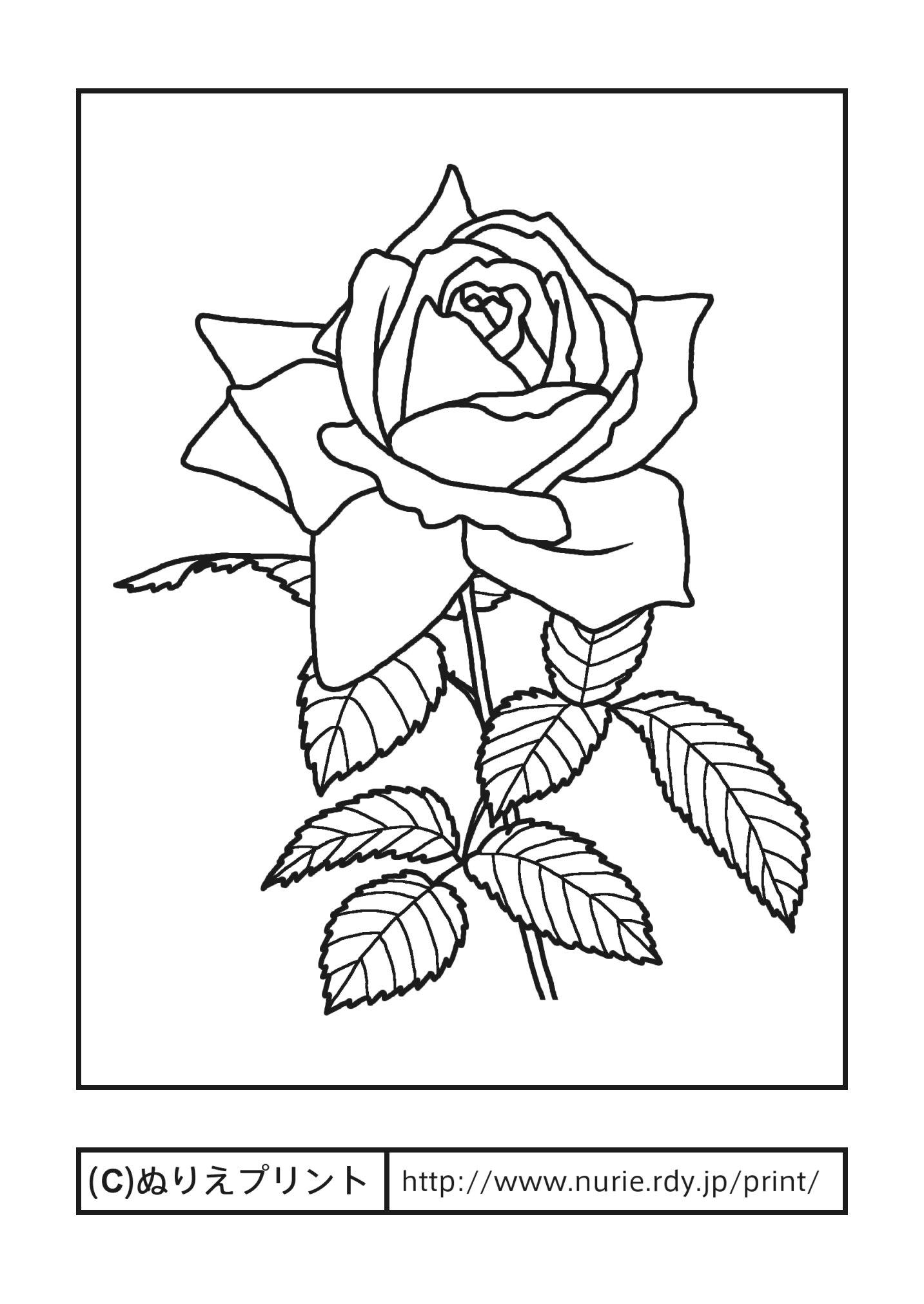 ... 無料塗り絵/都道府県【ぬりえ : 塗り絵 イラスト 無料 : イラスト